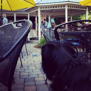 You may even find some dog-friendly restaurants.