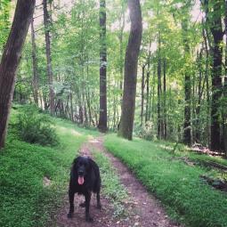 The Co-op Park 5K trail.
