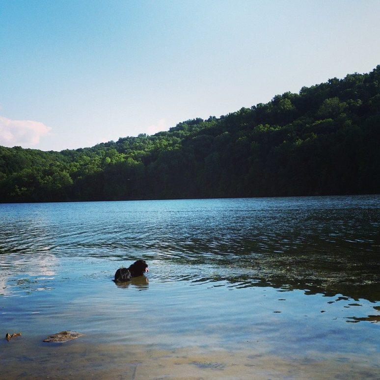 Murphy going for a dip in Yellow Creek Lake.